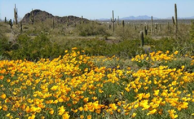 It's Wildflower Season at Arizona State Parks and Trails!